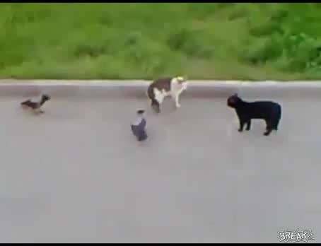 pelea pajaros gatos