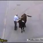 Un toro reconoce a su cuidador