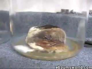 experimento hamburguesa putrefacta