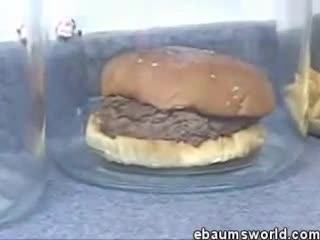 experimento hamburguesas podridas