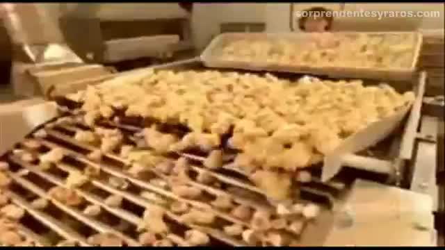 cria masiva pollos fabrica 13