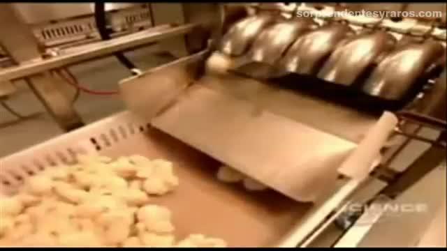 cria masiva pollos fabrica 16