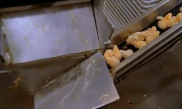 pollitos pollos factoria fabrica 4