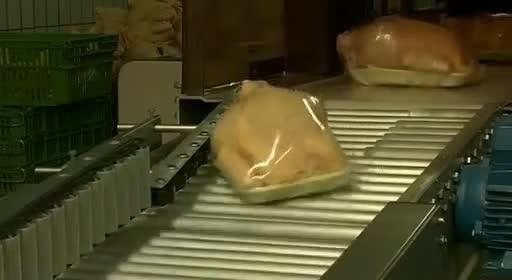 pollos pollitos fabrica denuncia crianza 53