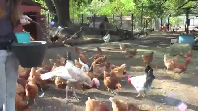 refugio animales paraiso animales 01