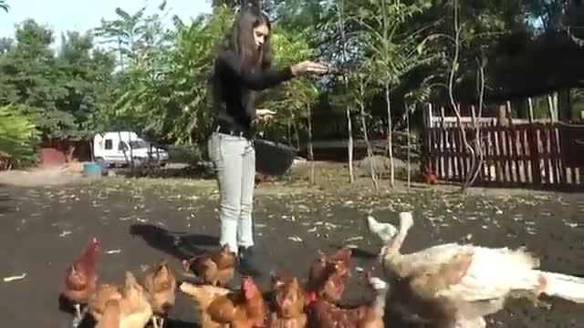 refugio animales paraiso animales 02
