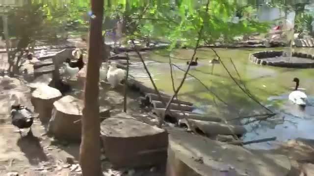 refugio animales paraiso animales 12