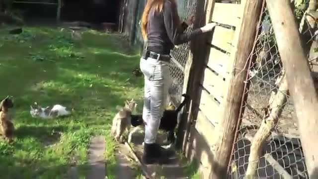 refugio animales paraiso animales 15