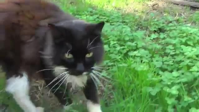 refugio animales paraiso animales 16