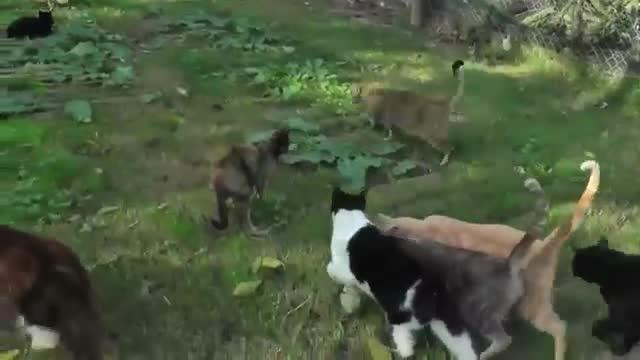 refugio animales paraiso animales 17
