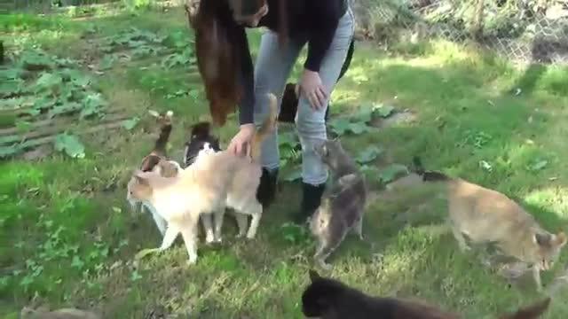 refugio animales paraiso animales 18