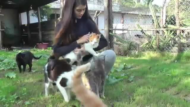 refugio animales paraiso animales 19