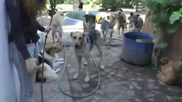 refugio animales paraiso animales 21