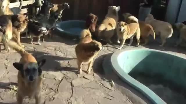 refugio animales paraiso animales 23