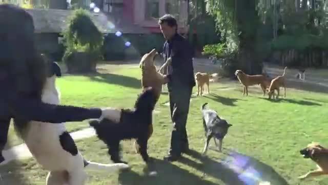 refugio animales paraiso animales 24