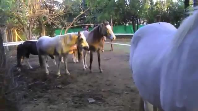 refugio animales paraiso animales 30