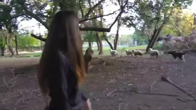 refugio animales paraiso animales 32