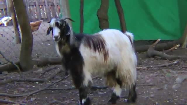 refugio animales paraiso animales 33