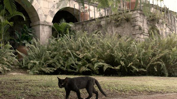Black cat outside Rose Hall