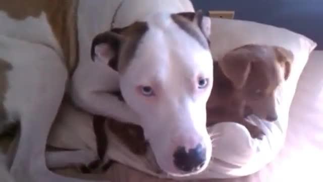 perros arrepentidos width=