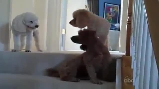 perros culpables 8