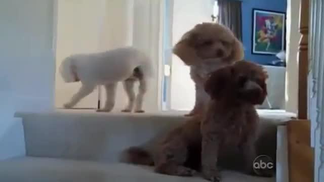 perros culpables 9