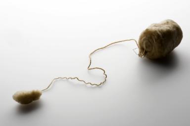 tampon algodon contraceptivo