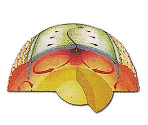tierra-nucleo-calor