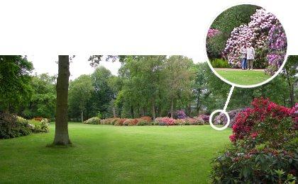 Alemania Parque Rhododendron Kromlau