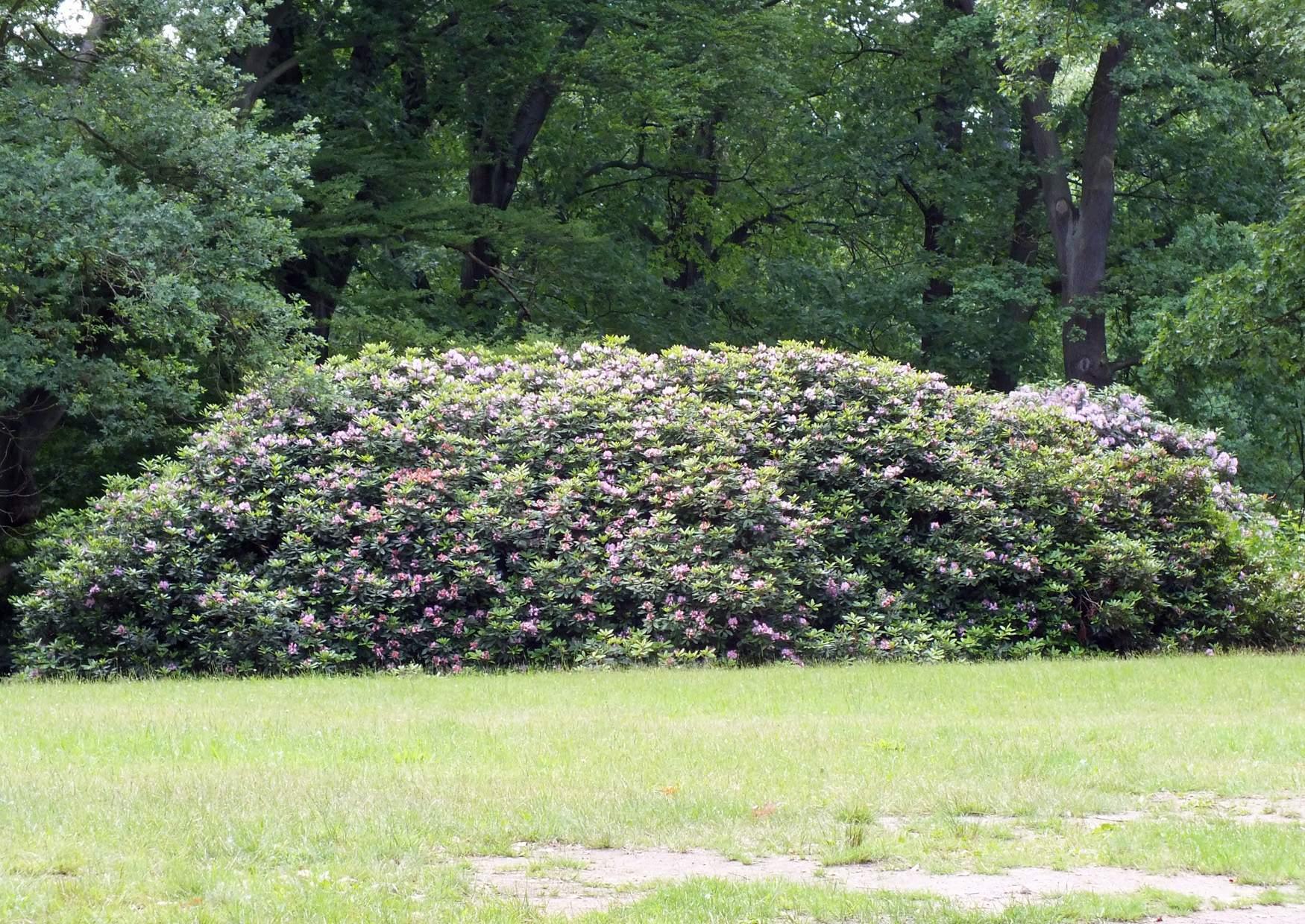 Parque Rhododendron Kromlau Alemania 08