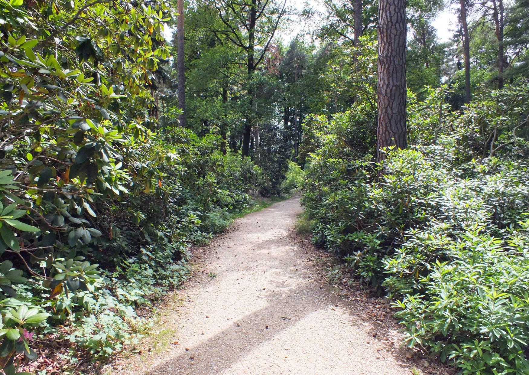 Parque Rhododendron Kromlau Alemania 09