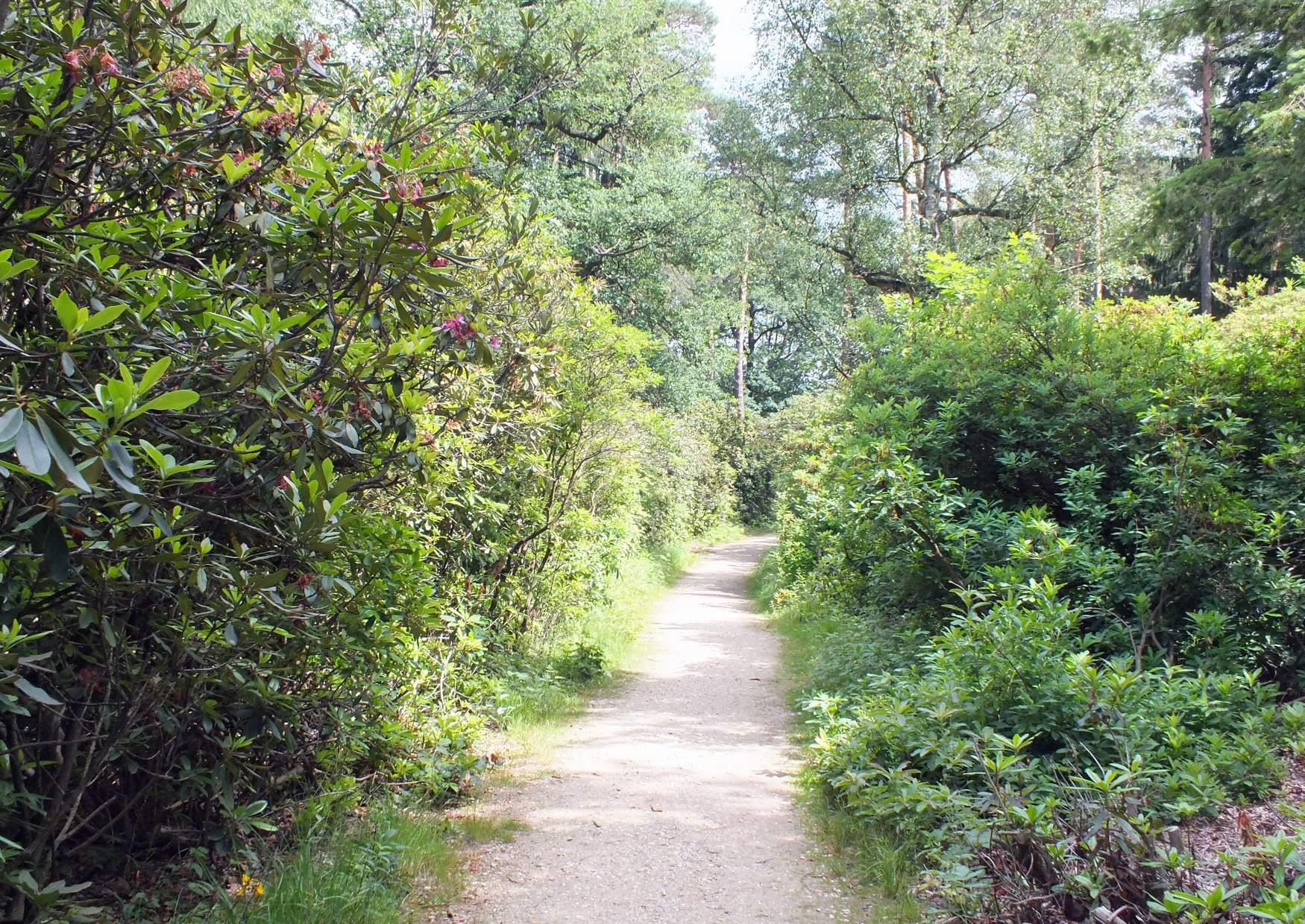 Parque Rhododendron Kromlau Alemania 10