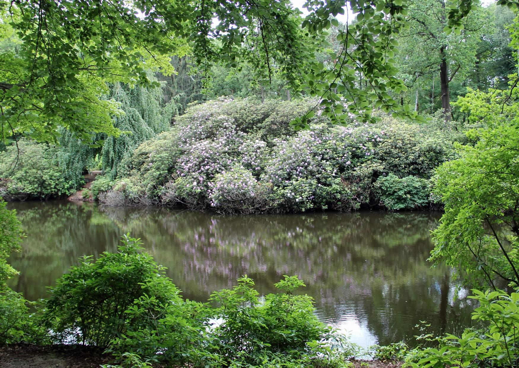 Parque Rhododendron Kromlau Alemania 19