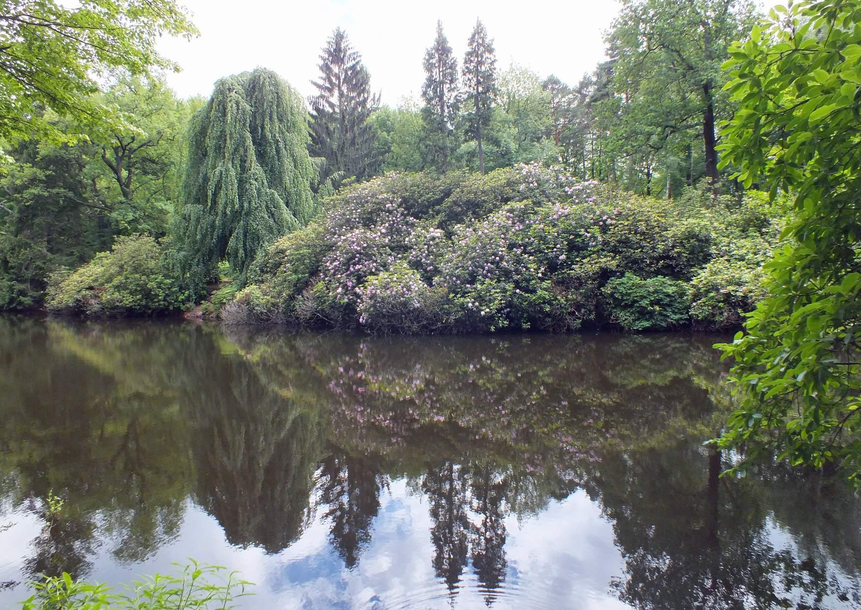 Parque Rhododendron Kromlau Alemania 28