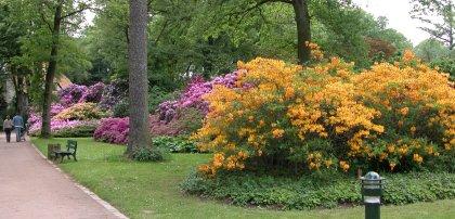 Parque Rhododendron Kromlau Alemania