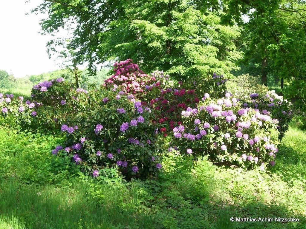 Parque Rhododendron Kromlau vegetacion