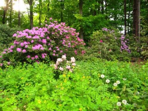 Parque Rhododendron naturaleza