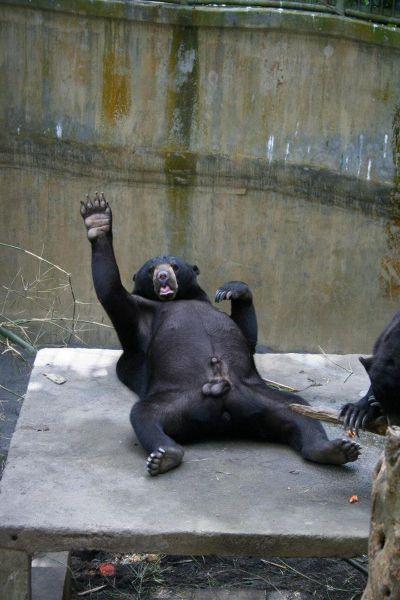 animales humor imagenes 05