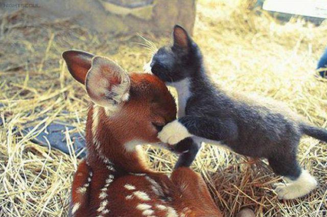 animales humor imagenes 06