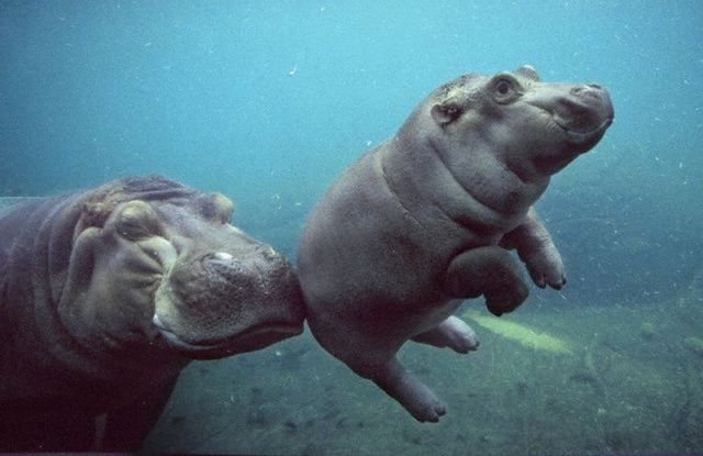 animales humor imagenes 11