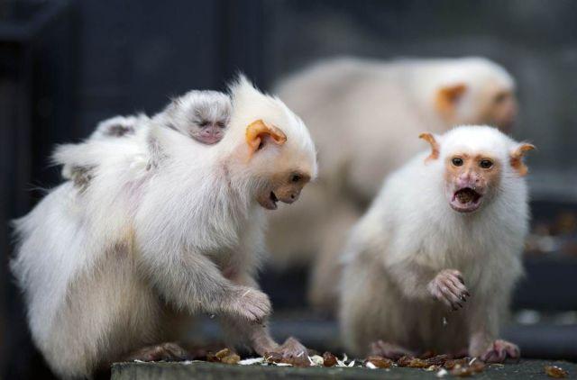 animales humor imagenes 21