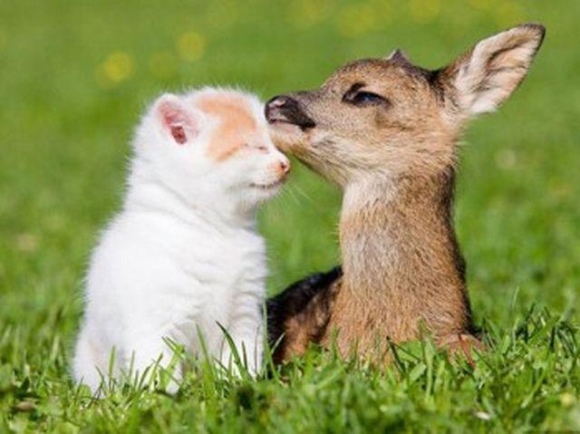 animales humor imagenes 35