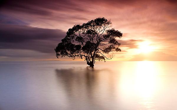 arbol lago