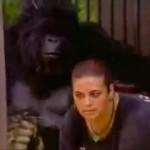 Broma del gorila en el zoo