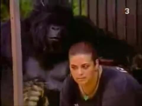 broma camara oculta gorila