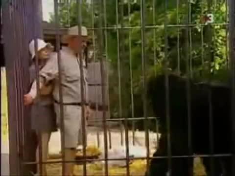 broma gorila
