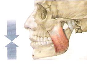 musculo masetero