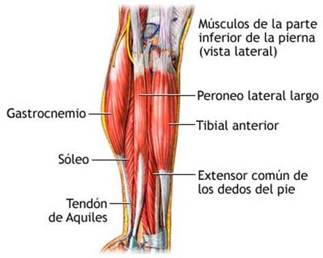 Cuál es el músculo más fuerte del cuerpo? | Blogodisea