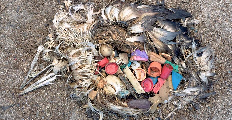 albatros contaminacion