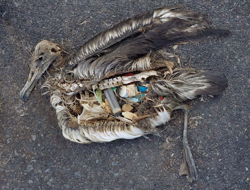 ave muerta plastico